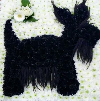 Scottish Terrier POA